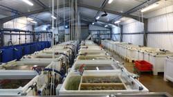 Loch Fyne Oysters depuration tanks