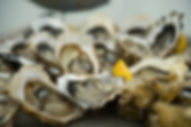 Crassostrea Gigas oysters in Scotland