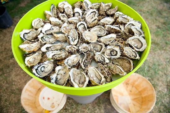 Crassostrea Gigas oysters