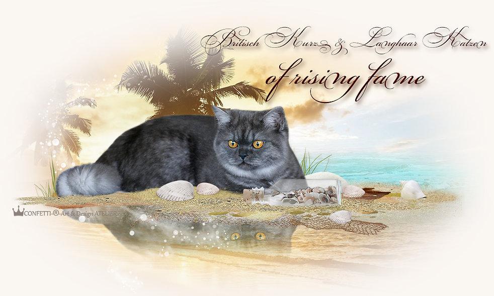 Britisch Kurz- und Langhaar Katzen of rising fame, speziell in smoke, bi- und tricolor in Buxtehude bei Hamburg