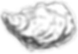 Crassostrea gigas
