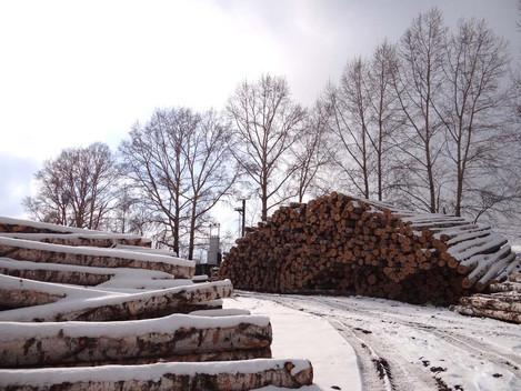 Горы древесины убраны