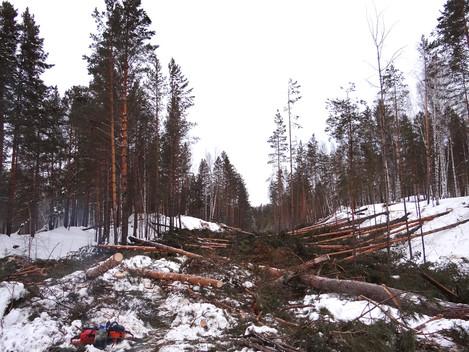Был лес - станет ПГС