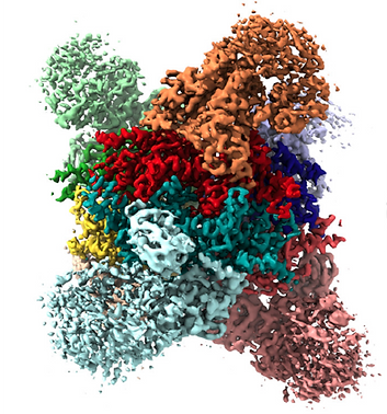 ArtificalEnzyme.png