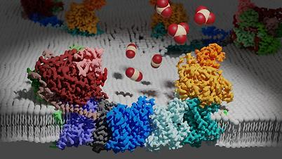 NdhIms-membrane.png
