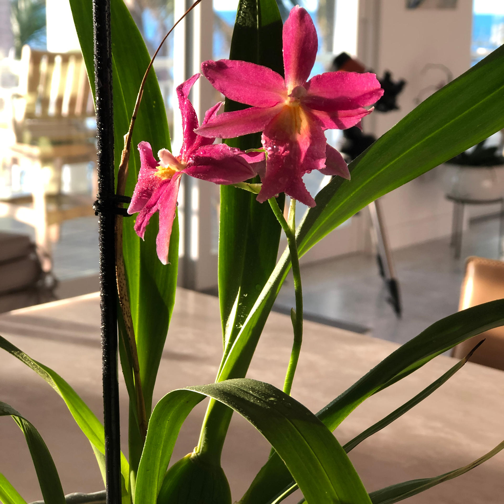 Join Our Orchid Club!