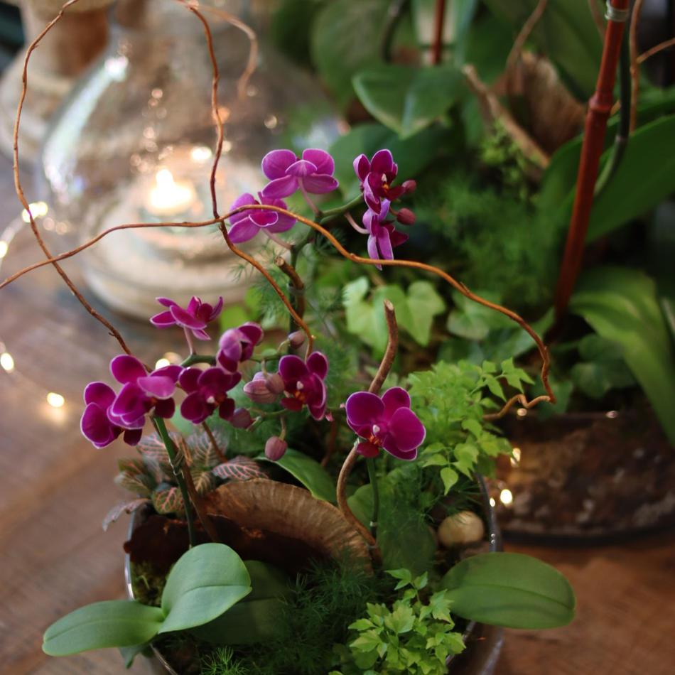 Orchid Arrangements.