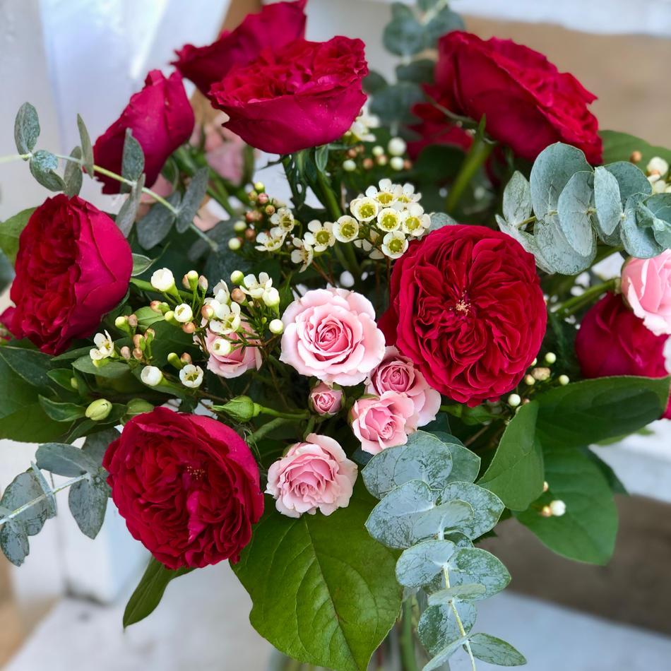 Tess Garden Roses