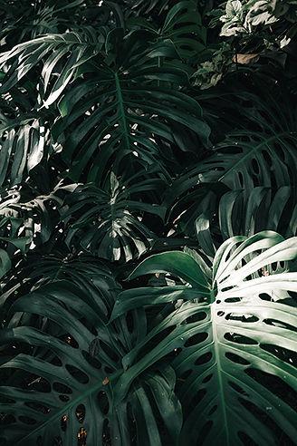 ULU_About_Palm.jpg