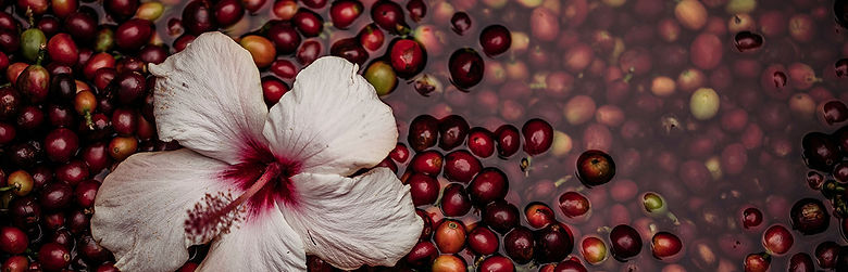 ULU_cherries rinse store.jpg