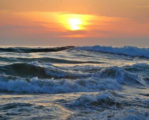 Os assuntos do mar e o estudo de peixes para o licenciamento ambiental