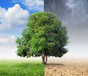 Mudanças climáticas opõem Brasil e Estados Unidos