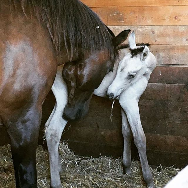 Hi mum! Welcome to the world #baby _Love this #filly . She's just stunning