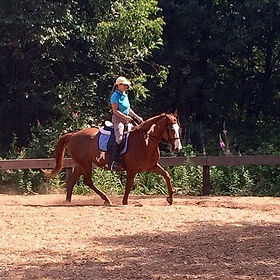 Capriole Academy,Horse Board,Riding Lessons,Horse Training,French Classical,Dressage,Jumping,school horse, port coquitlam, bc, philippe karl, equestrian, natural horsemanship, indoor arenas,