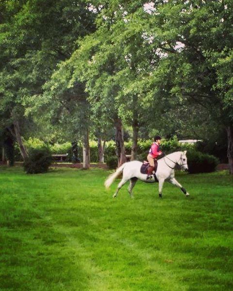Katrina Galloping to fence 4
