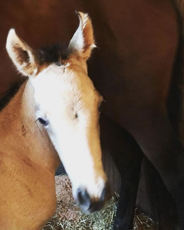Those ears!!! My filly needs a name ♡_Enter your name suggestions below and win a riding lesson! _So