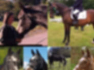Caroline Pearce equine story win.jpg