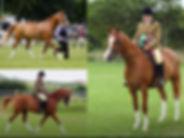 Best Horse win.jpg
