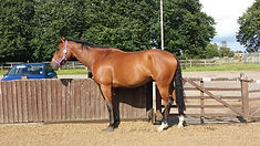 Online Horse Showing's Hints and Tips