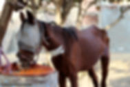 Online Horse Showing's News