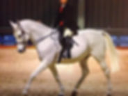 ridden show horse.jpg