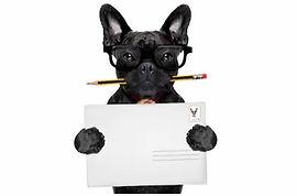 french-bulldog-dog-holding-pencil-260nw-