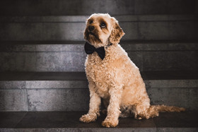 Pet Photography Northern Beaches - Mia a