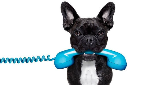 Frenchie Dog With Phone.jpg