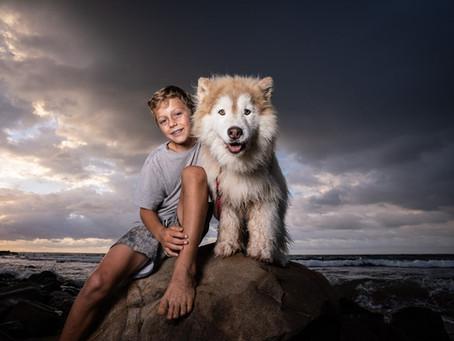 Location pet portraits at Avalon Beach - Indigo the Senior Husky
