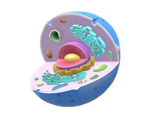 cell model.png