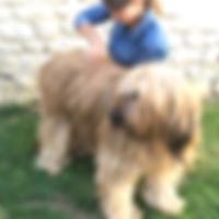 Chiropracteur animalier animaux chien chat chevaux rongeurs chiropratique chiropraxie annabelle neraudeau