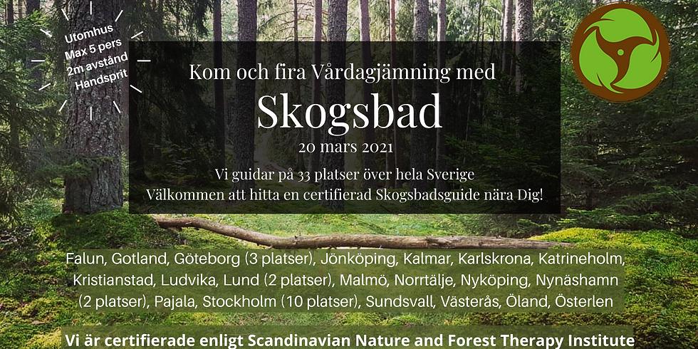 Tyresö, Måndalshöjden: Fira Vårdagjämning med Skogsbad