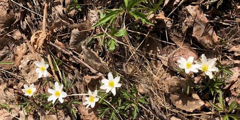 Tyresö, Måndalshöjden:  Möt våren med Skogsbad 15 maj