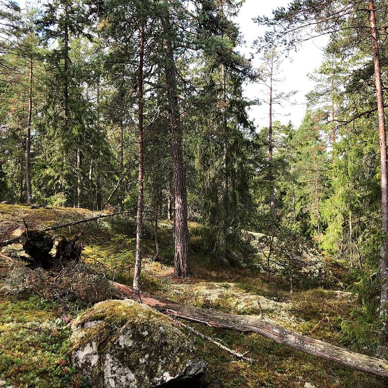 Tyresö, Måndalshöjden: Följ årstiden med skogsbad, sensommar
