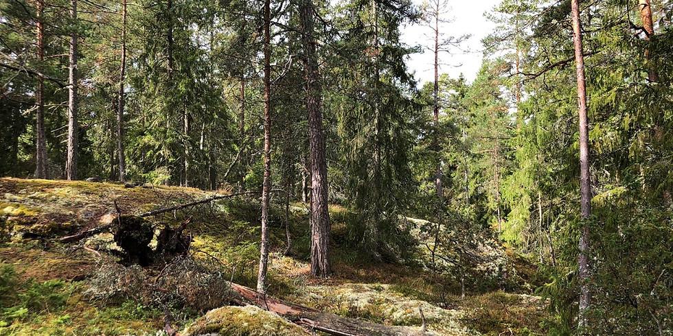 Tyresö, Måndalshöjden: Följ årstiden med skogsbad,  november i lyktans sken