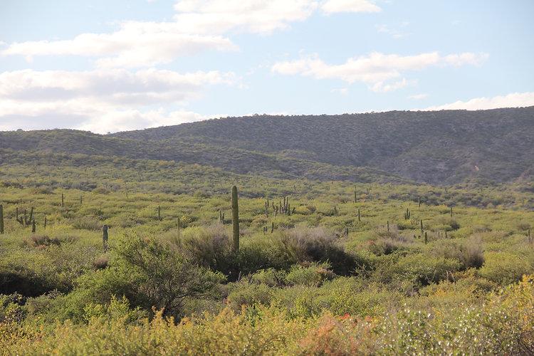 Loreto Green Desert Landscape.jpeg