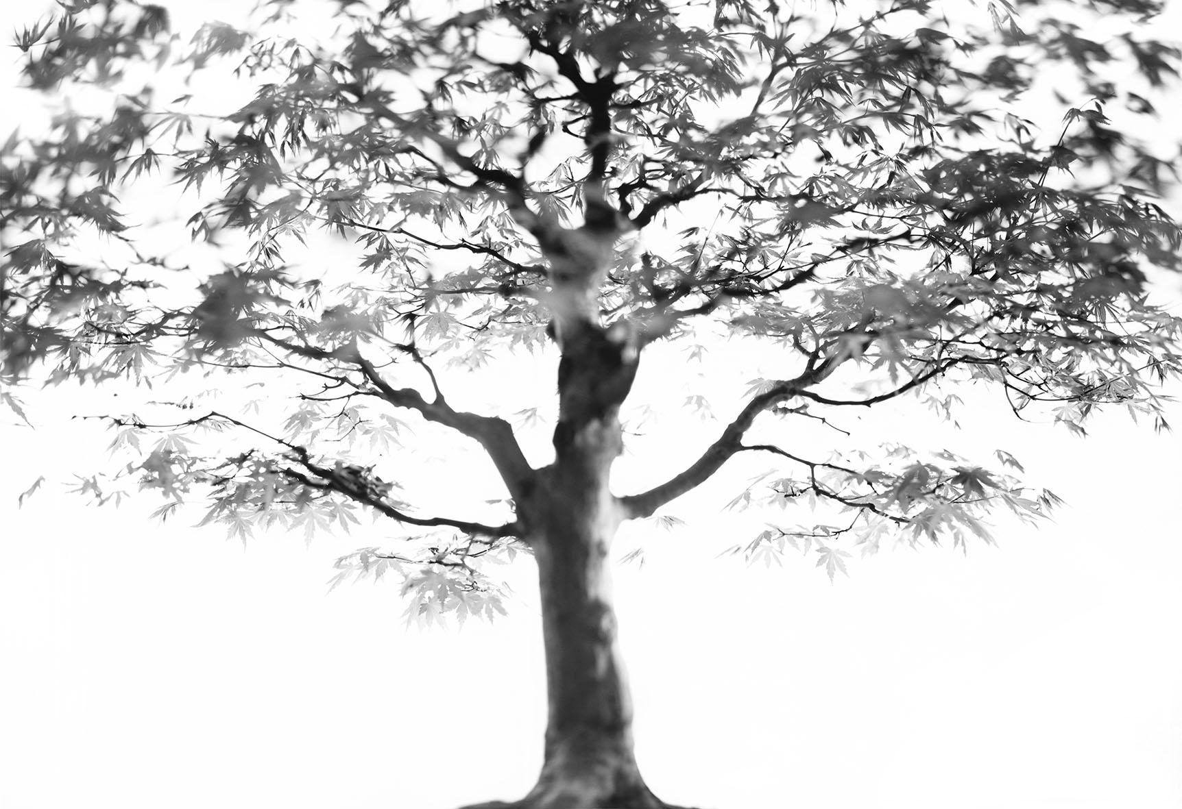 little big tree 12