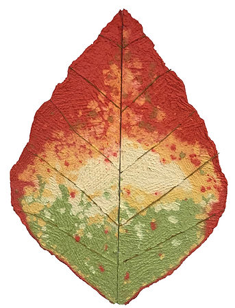 Autumn Leaf Changing.jpg