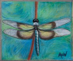 Dragonfly Pastel for Bev