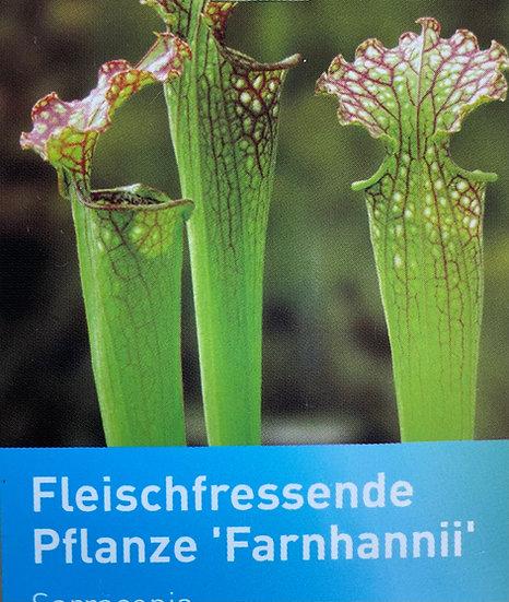 """Fleischfressende Pflanze """"Farnhannii"""""""