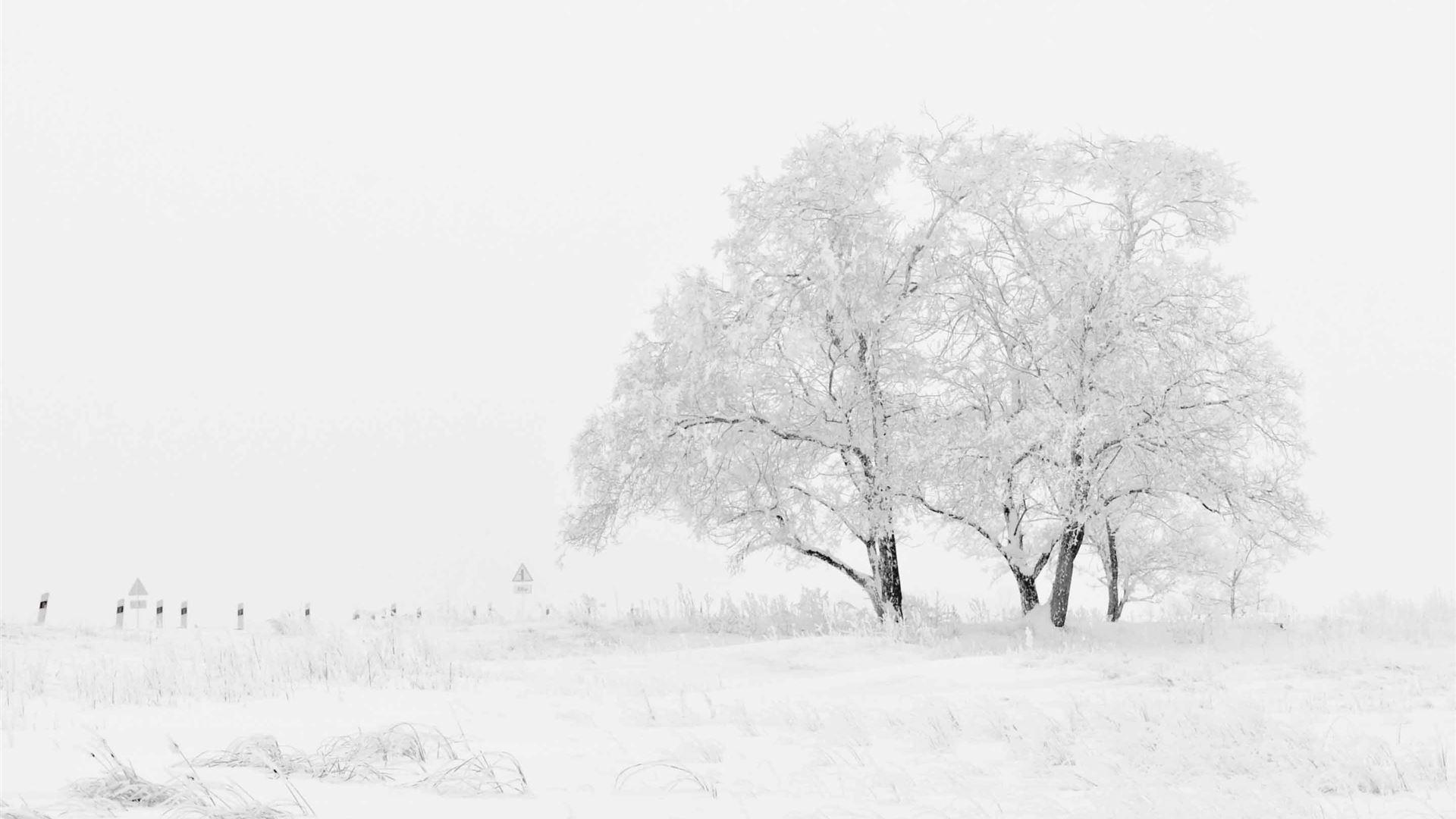 White-Winter-1920x1080.jpg