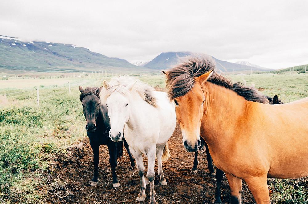 přirozené prostředí koně