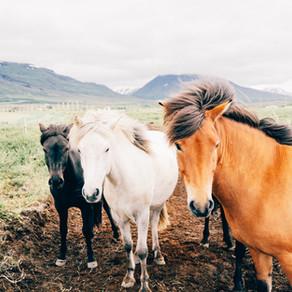 Communication animale intuitive, de quoi s'agit-il?