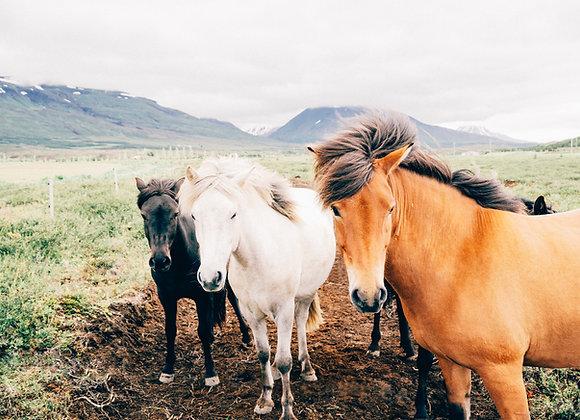 Additional horse