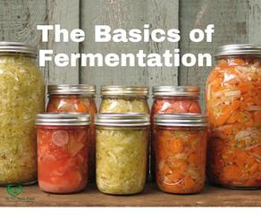 The Basics of Fermentation