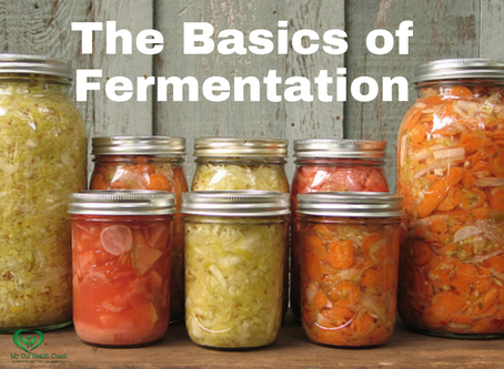 The Basics of Fermentation