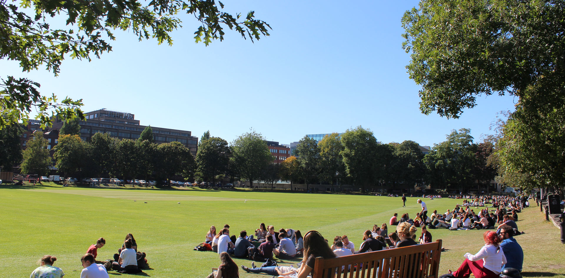 cricket pitch (1).JPG