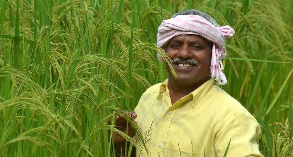traditional rice varieties is becoming popular in Chhattisgarh