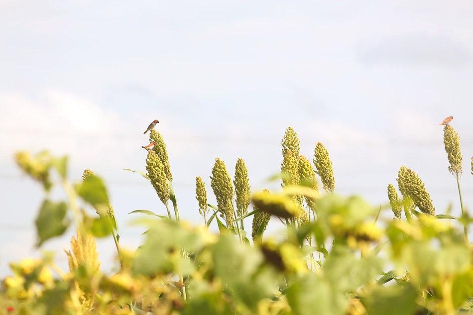 Farm Lands In Hyderabad