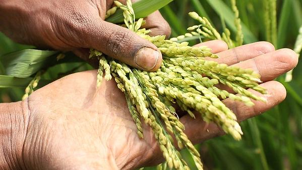Veda Bharat Natura Farming